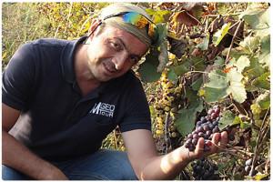 Виноградники Алазанской долины.